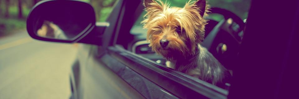 """Imagem ilustrativa para o post """"Conheça as regras para viajar com seu pet"""""""